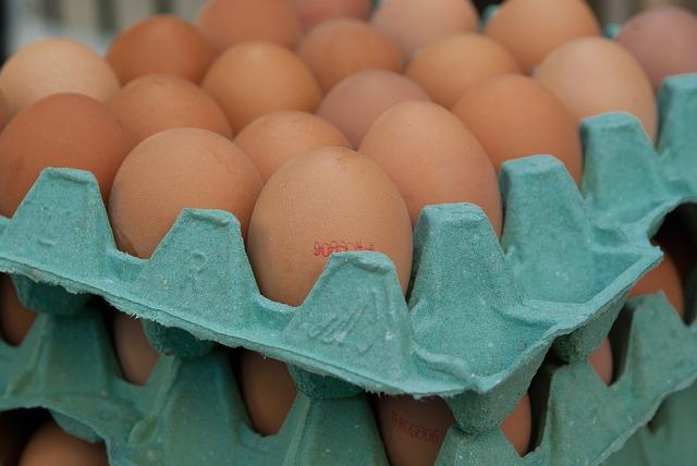 Getroffen kippenboeren zoeken uitweg om schade te claimen