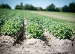 Klimaatrapport Verbond nog vrijblijvend over agrariërs