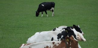 Aov-aanvragen boeren sneller geaccepteerd bij Movir