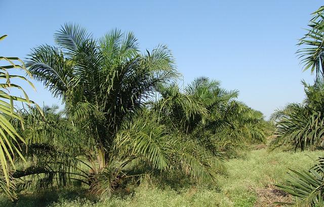 OneWorld: Pensioenfonds ABP investeerde in kap regenwoud