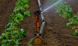Brede Weersverzekering dekt gewasschade door droogte