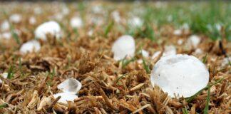 Meer akkerbouwers willen brede weersverzekering